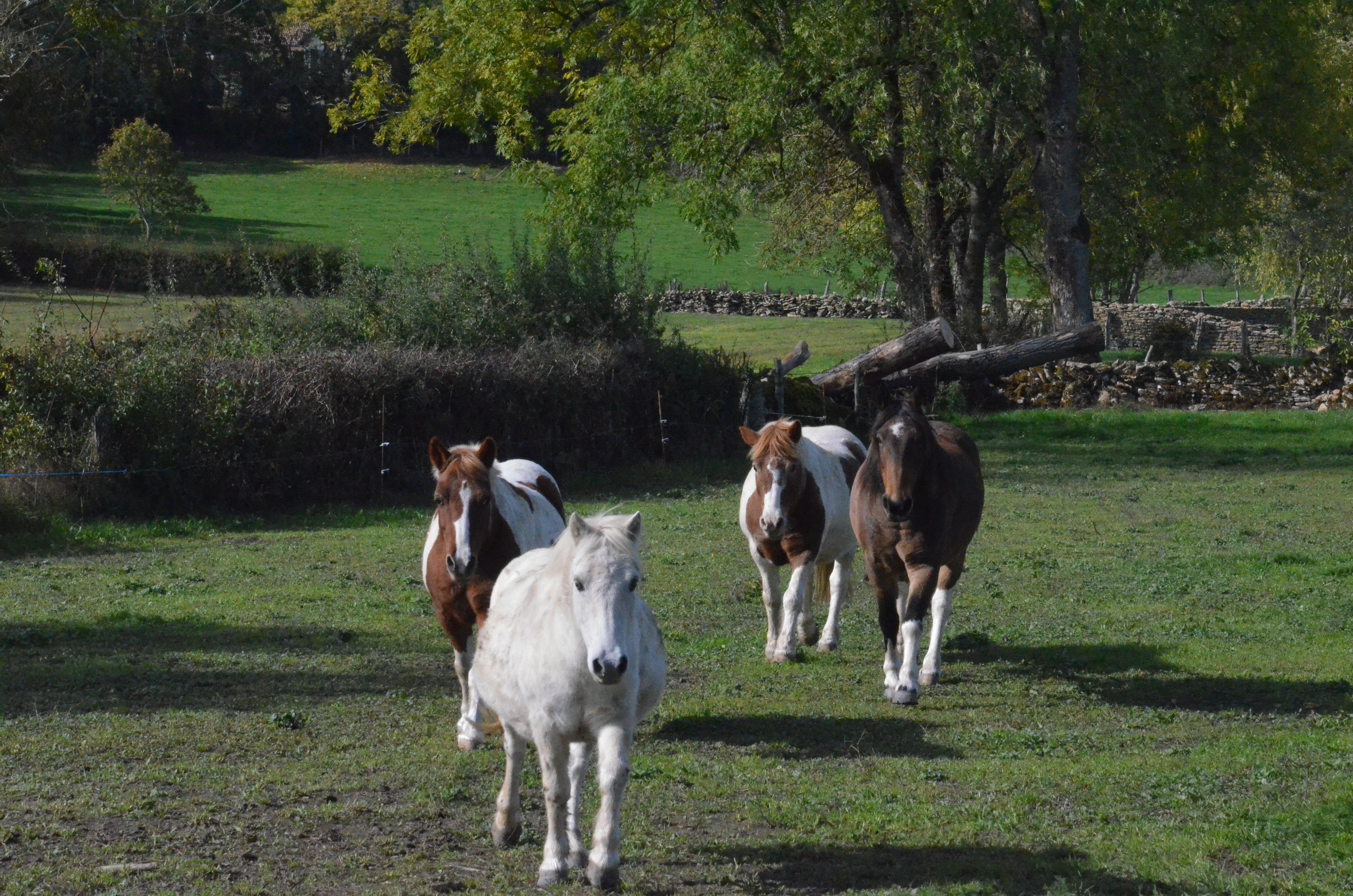 poney de balade pour enfants à Arconcey
